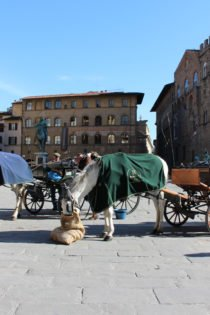 Horse carriages Piazza della Signoria, Florence, Italy